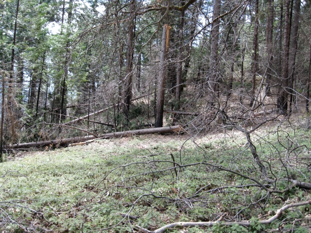 Between the winter storms, the 2008 fire, and subsequent beetle kills, there are plenty of trees that need to come out.